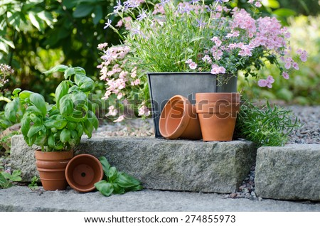 Cottage garden - beautiful flowers in pots with table and chair o - stock photo