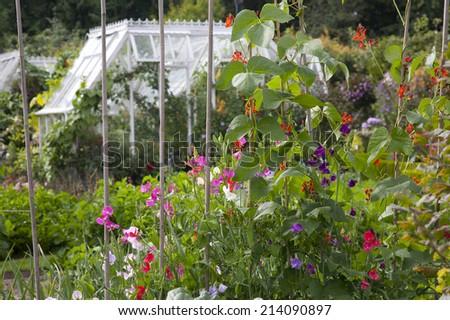 Cottage Garden Flowers & Vegetables - stock photo