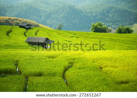 Cottage with a field of corn is golden brown. - stock photo