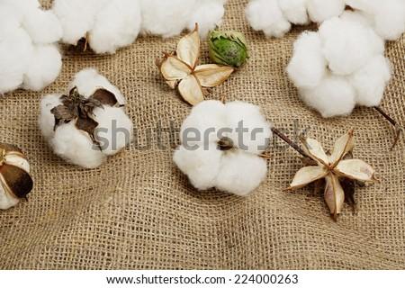 cotton balls on burlap texture - stock photo