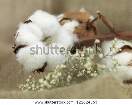 cotton flower on background of canvas bag with small white flowers near - stock photo