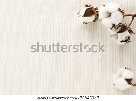 Cotton flower on cotton cloth - stock photo