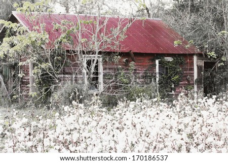 Cotton Shed - stock photo