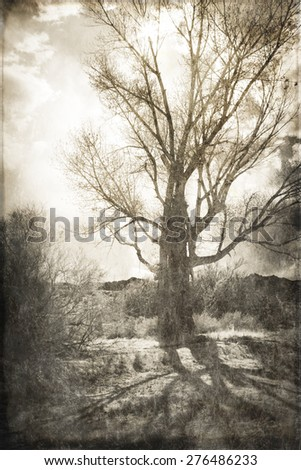 Cottonwood tree in California's high desert backlit with clouds and shadows processed with texture overlay for a vintage look. - stock photo