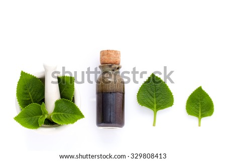 Country Borage,Indian Borage,Coleus amboinicus Lour with white mortar and essential extract oil isolate on white background. - stock photo