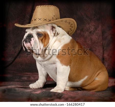 country dog - english bulldog wearing western hat - 4 years old - stock photo