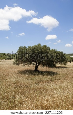 country landscape in sicily, italy, europe - stock photo