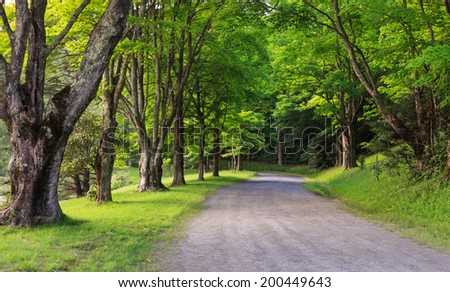 Country lane lined with lush green trees along Bass Lake at Moses Cone Park off the Blue Ridge Parkway in Western North Carolina. - stock photo