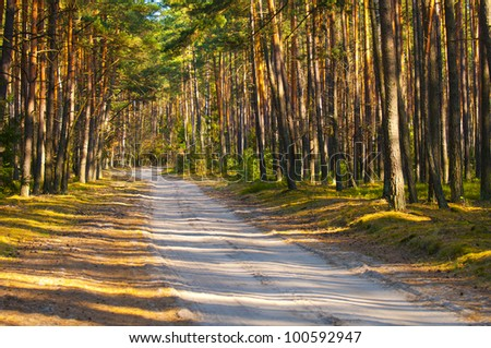 Country road along pine trees alley - stock photo