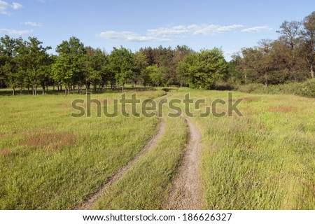 Country road in a meadow on a sunny day - stock photo