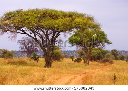 country road in africa with a baobab tree  - stock photo