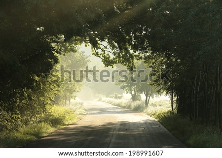 Country road in foggy May morning. - stock photo