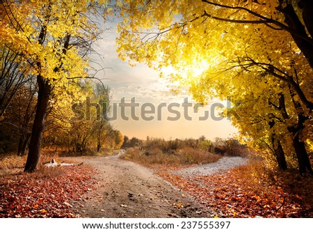 Country road in the autumn maple forest - stock photo