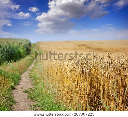 Country road in wheat field - stock photo