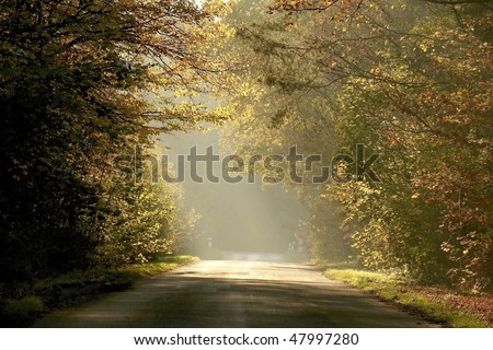 Country road leading through the misty autumn forest at sunset. - stock photo
