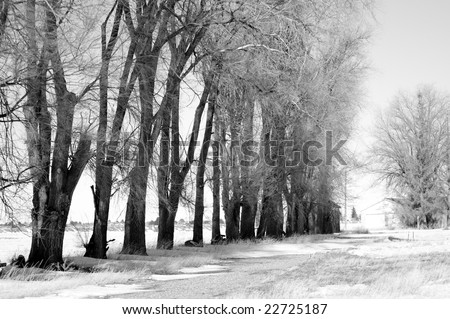 Country Road lined with trees with melting snow - stock photo
