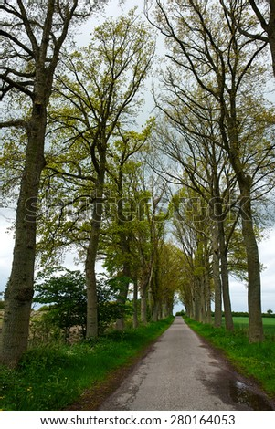 Country road running via lush green trees alley road                                        - stock photo