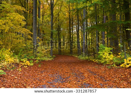 Country road surrounded by colorful beech wood in autumn - stock photo
