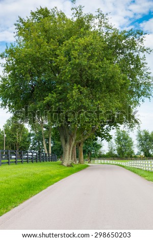 Country road surrounded the horse farms, summer landscape. - stock photo