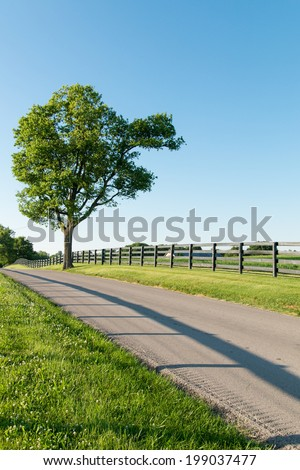 Country road surrounded the horse farms, tree with unusual shape - stock photo