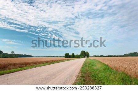 Country road through a wheaten field - stock photo