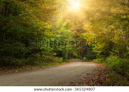 country road through maple forest in autumn, canada. - stock photo