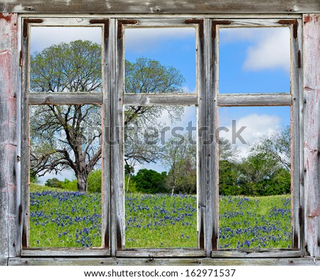Country spring vista with Texas bluebonnets, seen through an old rustic window frame - stock photo