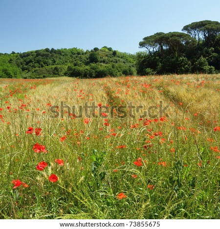 countryside in spring, Italy - stock photo