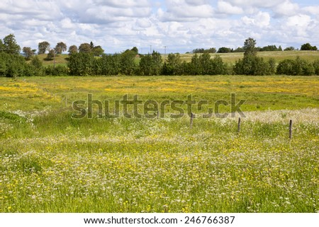 Countryside landscape with flowering meadows - stock photo