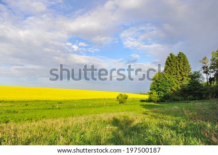 Countryside landscape with yellow rapeseed field - stock photo