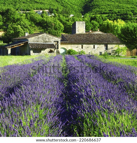 countryside of Provence with blooming lavander field - stock photo