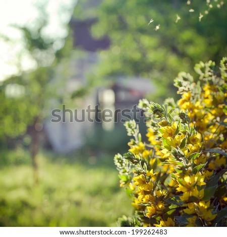 Countryside scene: old house in a garden, with flowers on the foreground, square composition with selective focus on the flowers - stock photo