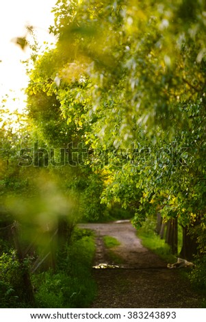 Countryside view alley asphalt road in green park or forest outdoor.  - stock photo