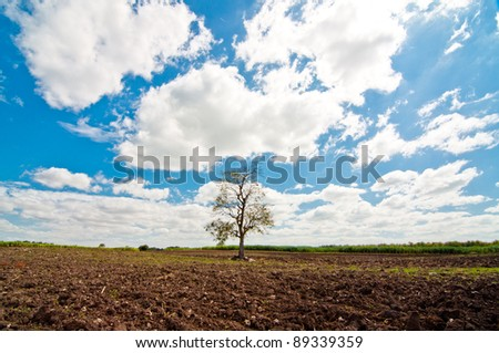 Countryside View of Crops Growing - stock photo