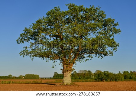 Countryside View of Ploughed Farmland with a Lone Oak Tree and Blue Sky Above - stock photo
