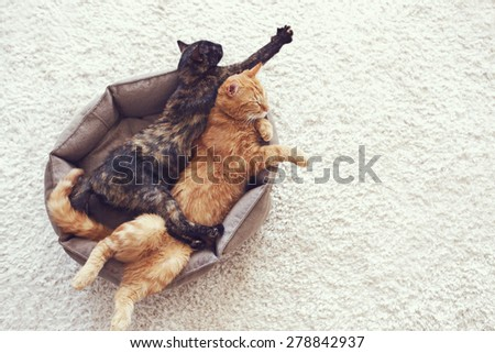 Couple cats sleep and hugging in their soft cozy bed on a floor carpet - stock photo