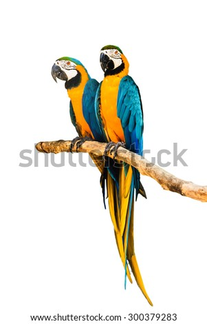 Couple Macaw Parrot isolated on white background - stock photo