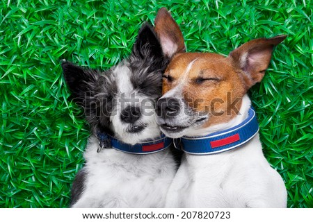 couple of dogs in love very close together lying on grass in the park - stock photo