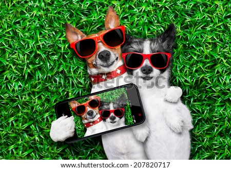 couple of dogs in love very close together lying on grass taking a selfie - stock photo