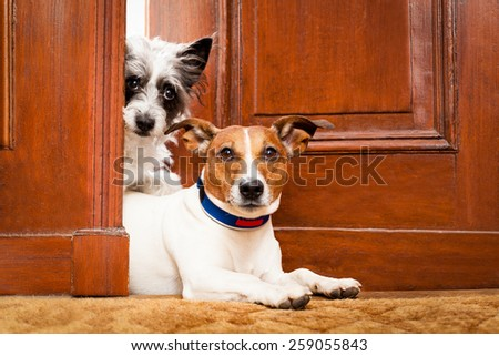 couple of dogs watching at the door at home , on the doormat - stock photo