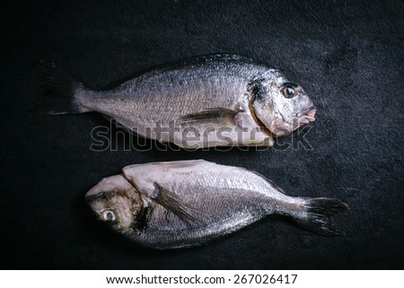 Couple of glithead fish on black background  - stock photo