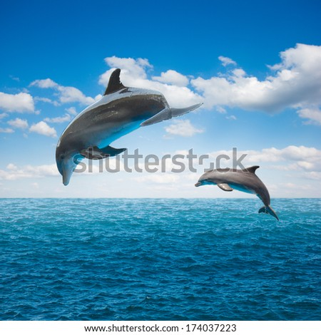 couple of jumping dolphins,beautiful seascape with deep  ocean  waters and cloudscape - stock photo