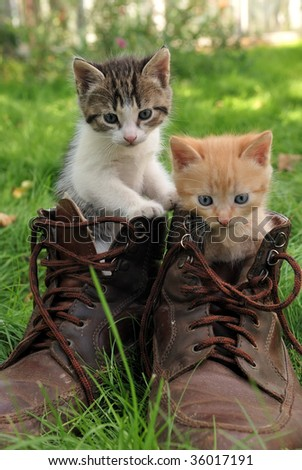 couple of little kittens sitting in boots outdoors on green grass - stock photo
