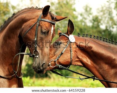 couple of stallions - stock photo