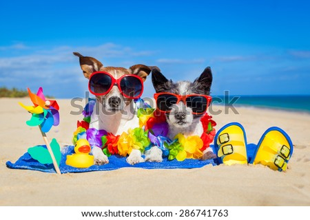 couple of two dog sitting close together on towel at the beach on summer vacation holidays, on a honeymoon retreat  - stock photo