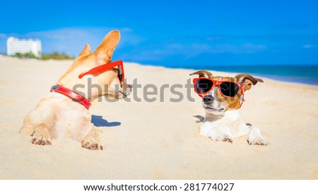 couple of two dogs  buried in the sand at the beach on summer vacation holidays , having fun and enjoying ,wearing red sunglasses fun and enjoying ,wearing red sunglasses - stock photo