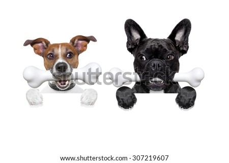 couple of two hungry, and jealous dog side by side , behind a blank banner or wall, isolated on white background, envy in the air - stock photo