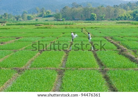 Couple of vegetable gardeners are watering by rattan shovel - stock photo