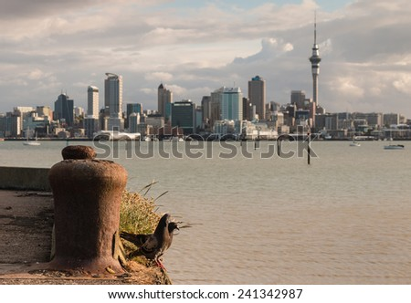 courting pigeons with Auckland skyline in background - stock photo