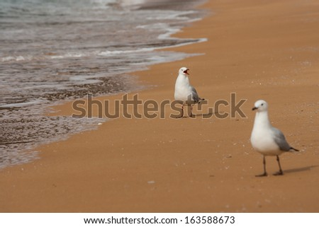 courting sea gulls - stock photo